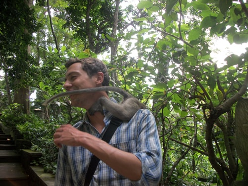 Attacked By A Monkey