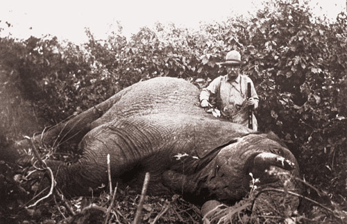 Teddy Roosevelt with an Elephant that he shot and killed
