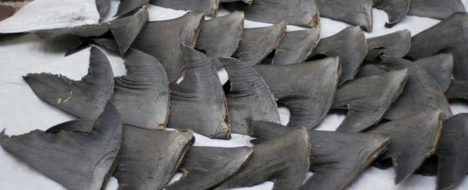how can we stop shark finning