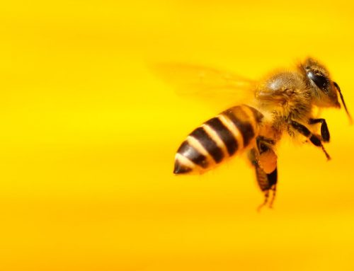 What is happening to the bees?