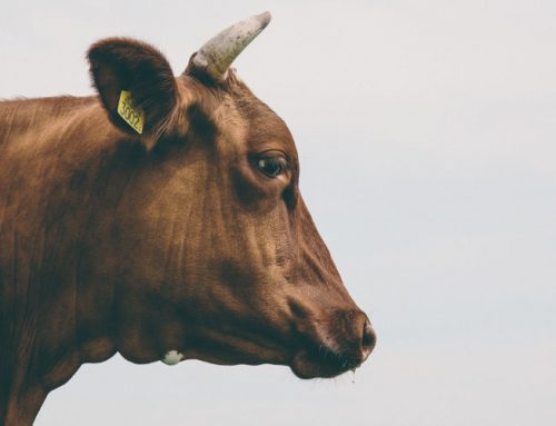Why Eating Less Meat is Better for You and the Environment