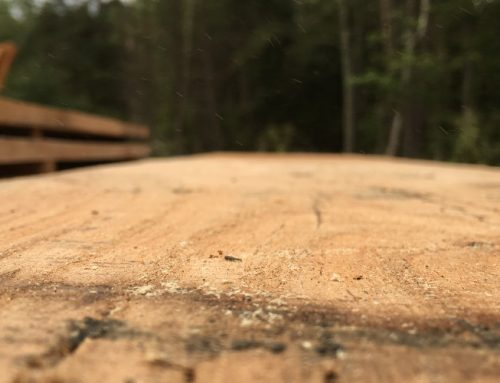 Building a Sustainable Tiny House: Getting the Wood