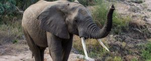 How You Can Stop Elephant Poaching