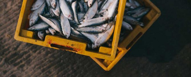 We may find out the effects of overfishing after it's too late