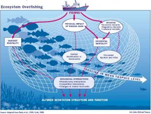 Overfishing Explained