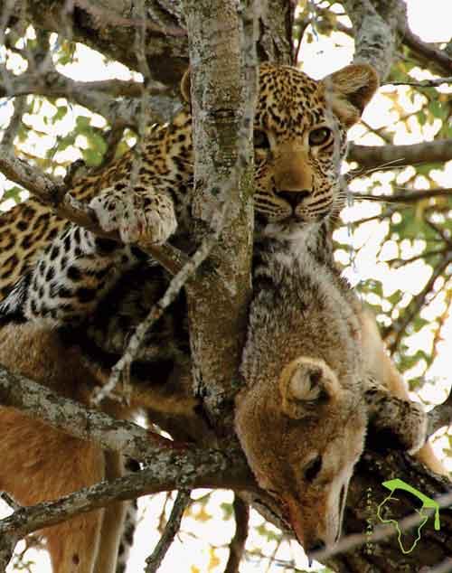 [Image: Wildlife-12-small.jpg]