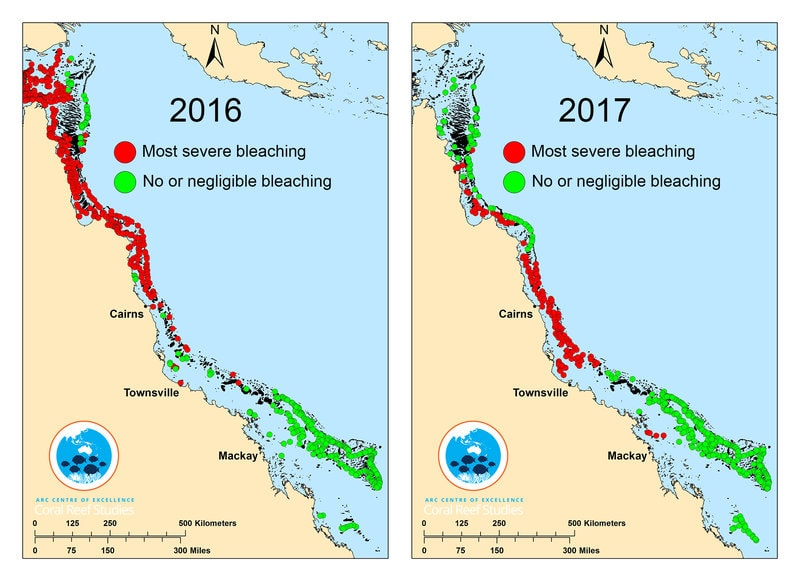 Coral bleaching in the Great Barrier Reef