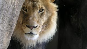 Trump, Trophy Hunting, and More Obstacles in Wildlife Trafficking