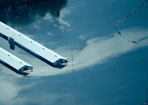 Aerial view of pig farms in Southeast North Carolina  after Hurricane Florence