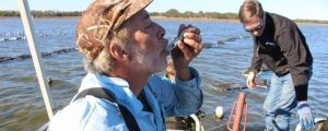 Tim Holbrook of Masonboro Oyster Reserve Co