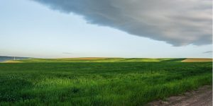 Palouse prairie under clouds